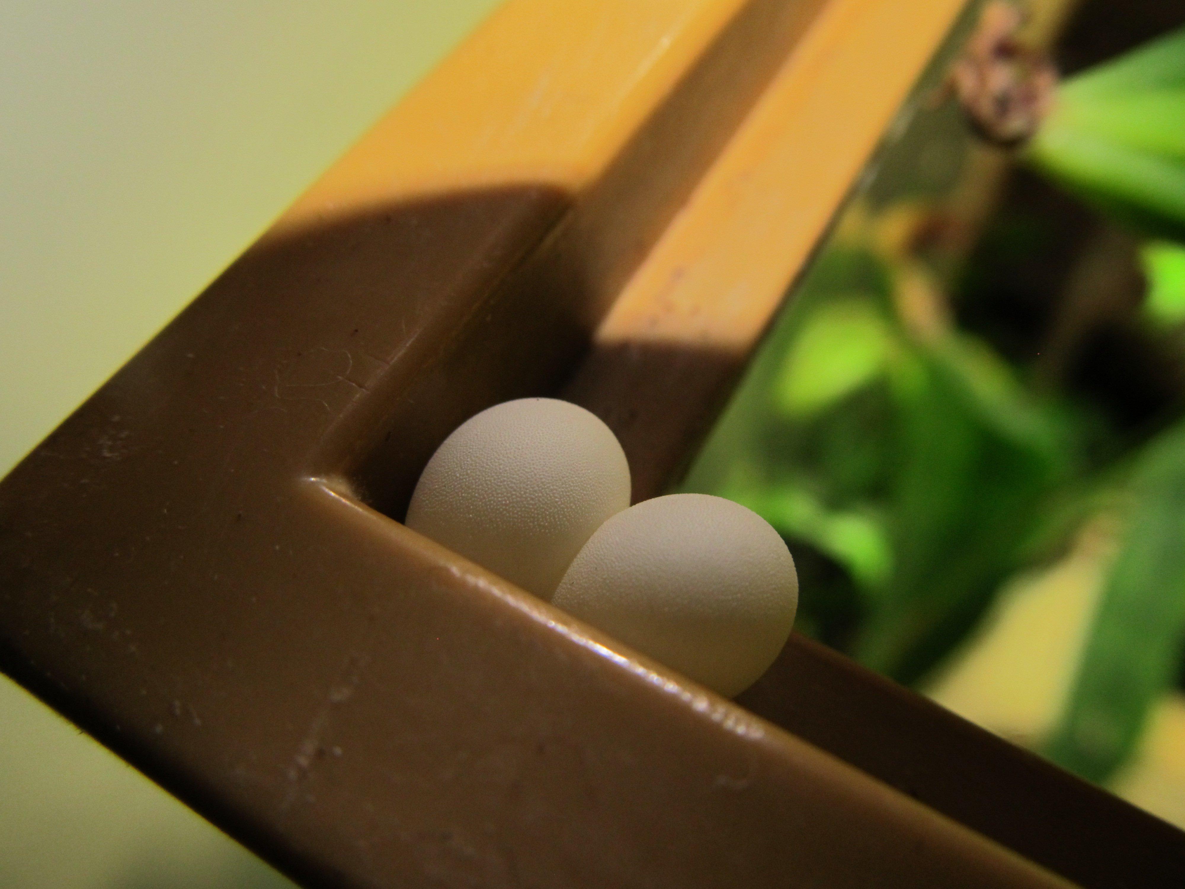 gecko_eggs_textured