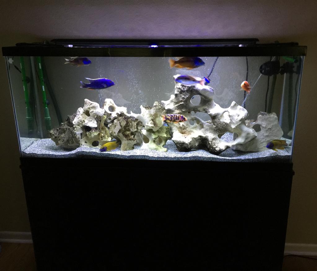 Aquarimax 267 Aquarium Podcast Aquarimax