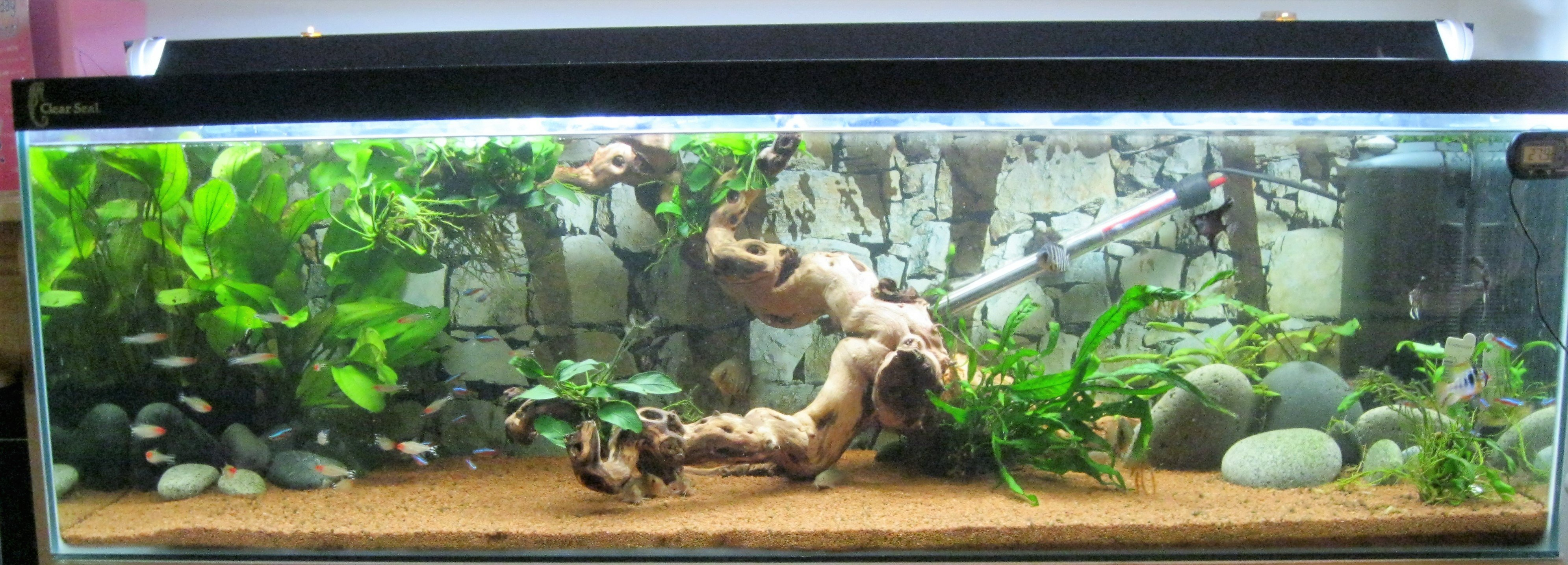 Living Room Tank